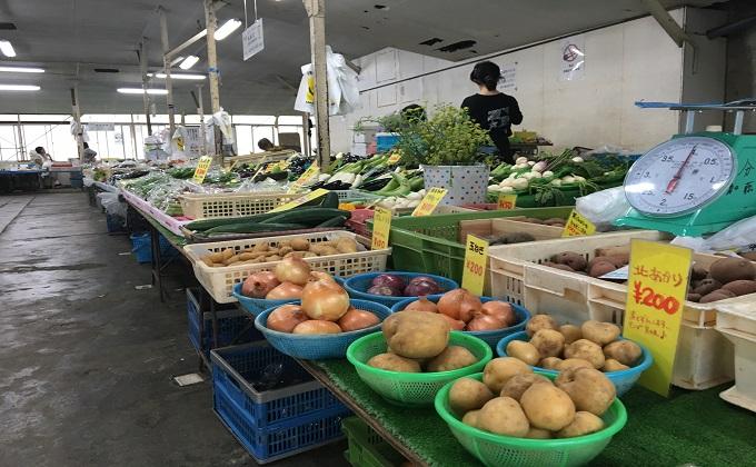 鎌倉野菜1